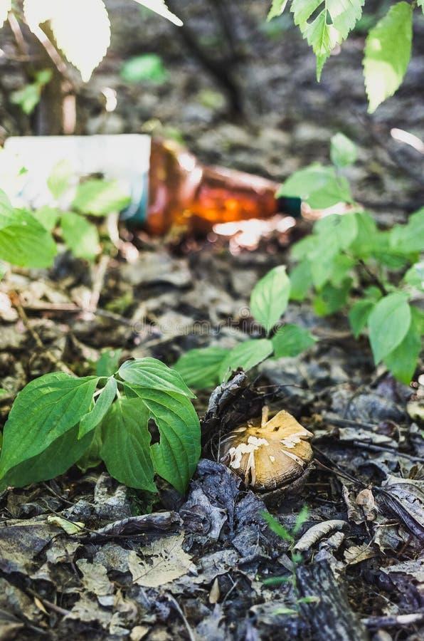 年轻蘑菇和塑料瓶在背景中 免版税库存照片