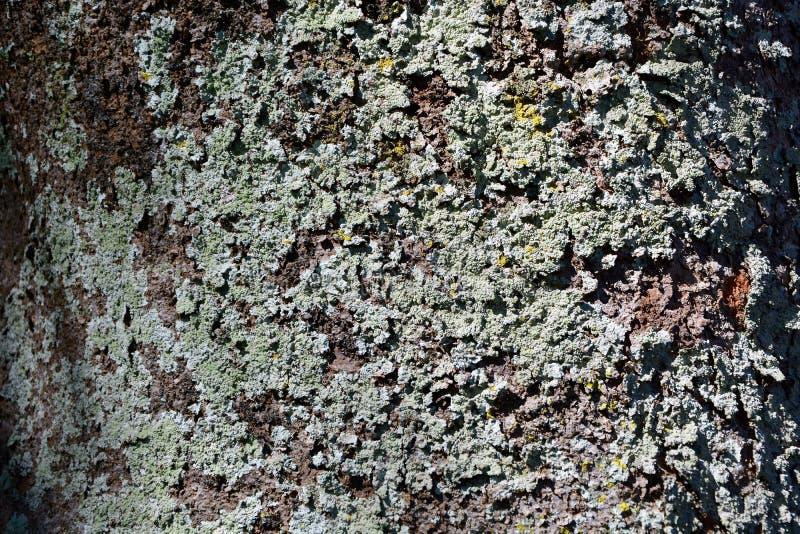 年迈的树皮的深刻的纹理和颜色 库存图片