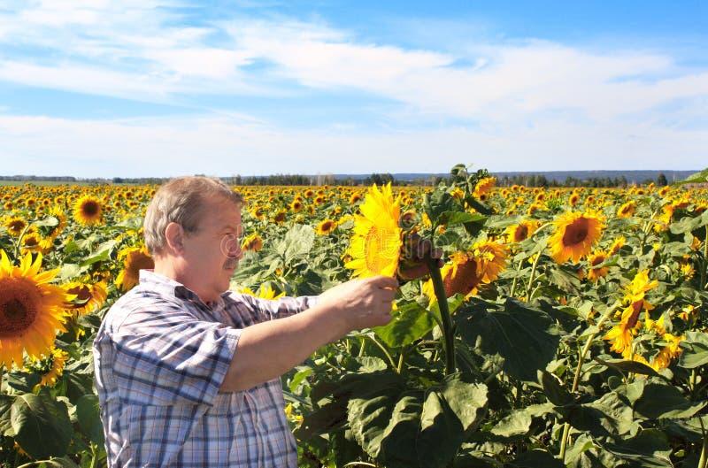 年长农夫和向日葵 免版税图库摄影