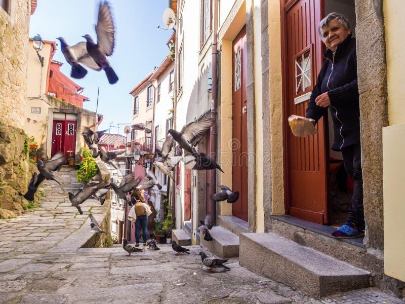 年长夫人在老镇喂养在她的房子前面的鸽子 免版税库存照片