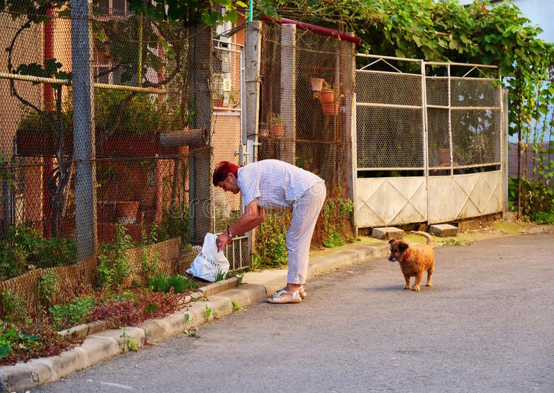 年长妇女喂养流浪狗 库存照片