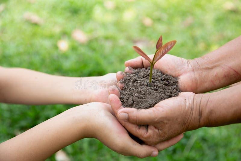 年长妇女的环境世界地球日,手和少年girlholding年幼植物反对绿色自然本底在春天 免版税库存图片