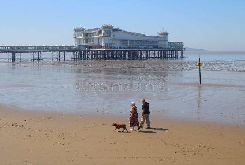 年长走在海滩的夫妇和狗 图库摄影