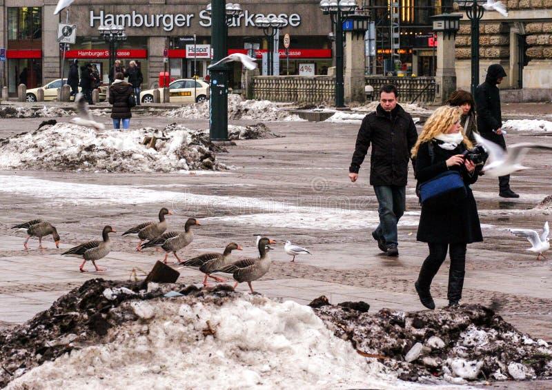 01 02 2011年,汉堡,德国 欧洲建筑学 汉堡都市风景在冬天 免版税库存照片