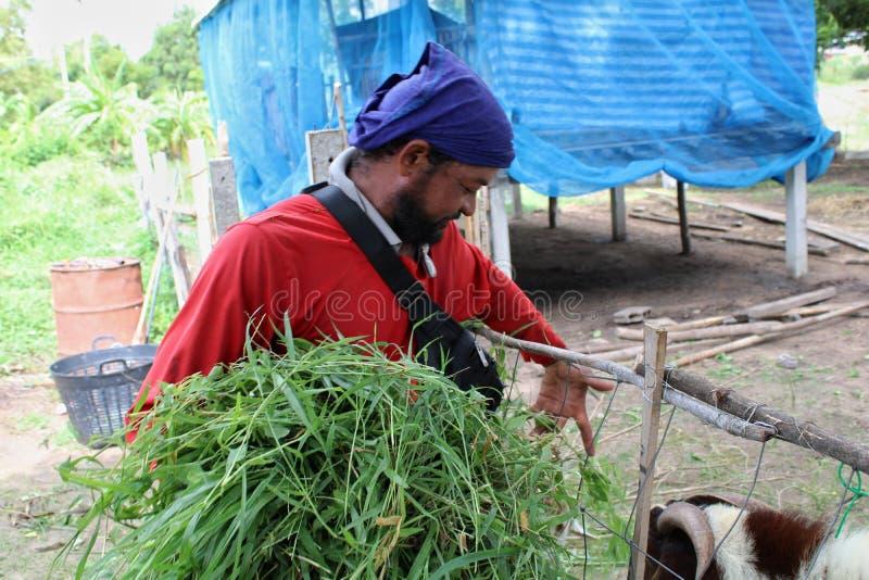 2019年8月24日,《链牙》,泰国 农民在农场工作 免版税库存图片