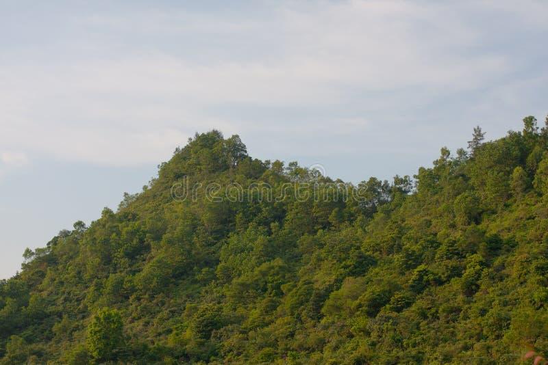 2008年8月9日,小山蓝天草地上 免版税库存照片