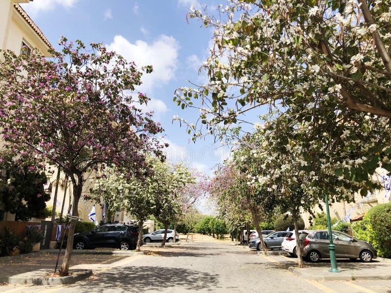 2019年4月2日:以色列霍隆的私人房屋、树木和街道 免版税库存图片