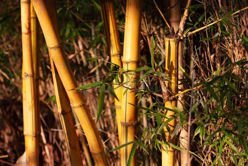 2008年8月9日a竹林,美丽的绿色自然背景 库存照片