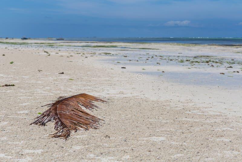 2018年 02 21,Kiwengwa,坦桑尼亚 白色沙子和天际线海岸线海景  在非洲附近的旅行 库存照片