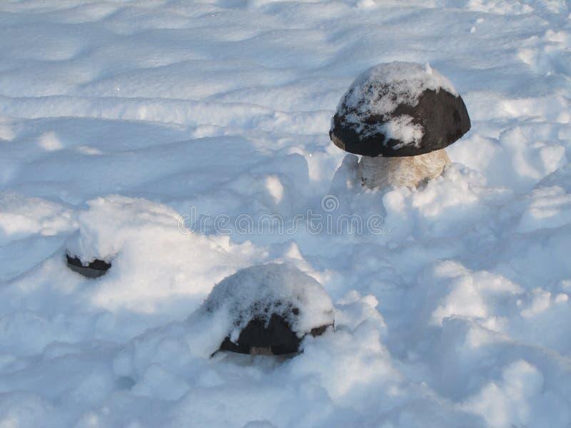 并且在冬天,种植蘑菇 库存照片