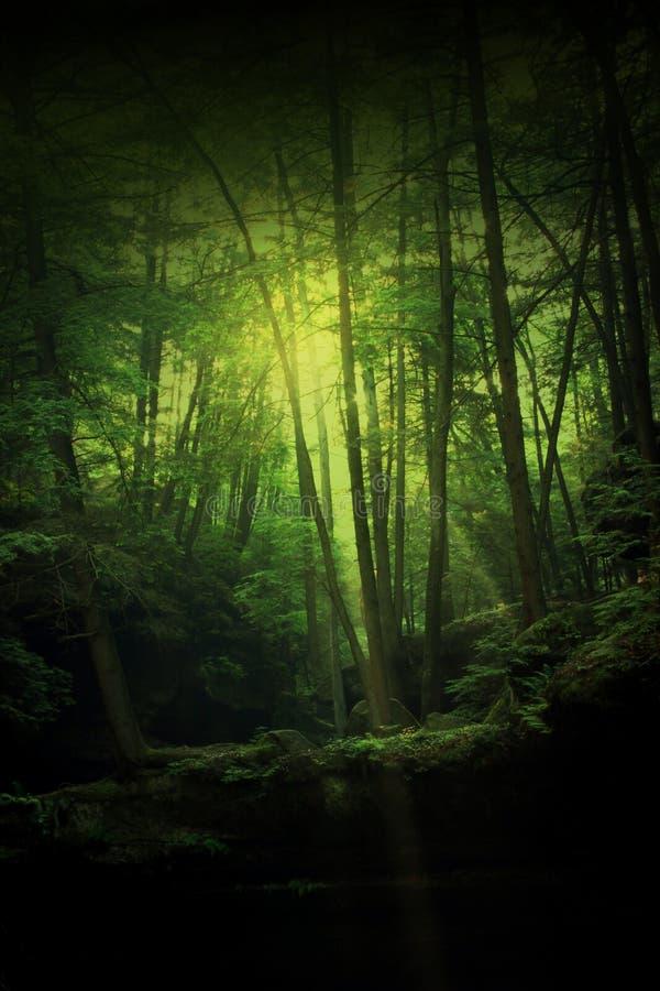 幻想森林 库存图片