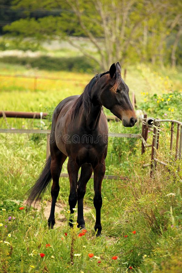 幼小公马在草甸 免版税库存图片