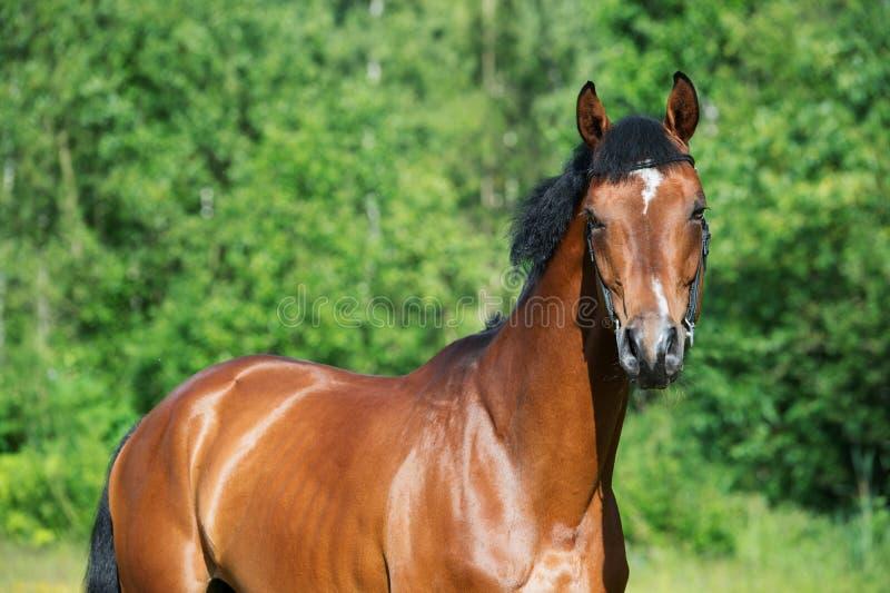 女人与公动物交配文章_图片 包括有 竞争, 公马, 纵向, 上涨, 夏天, 横向, 交配动物者