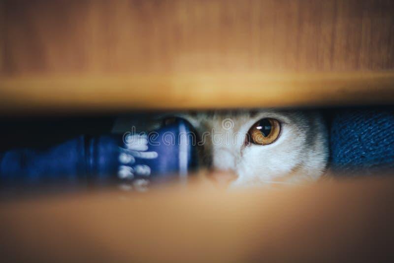 幼小小猫关闭了在箱子和使用 免版税图库摄影