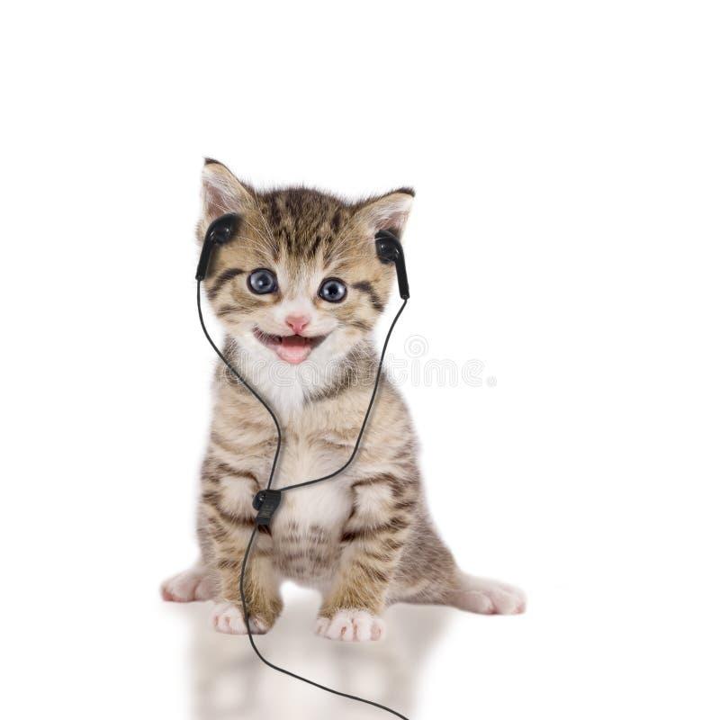 幼小猫听到与耳机/耳机的音乐 免版税库存照片