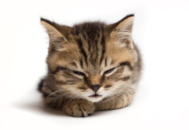 幼小猫结束了眼睛和睡眠 ?? 免版税库存图片