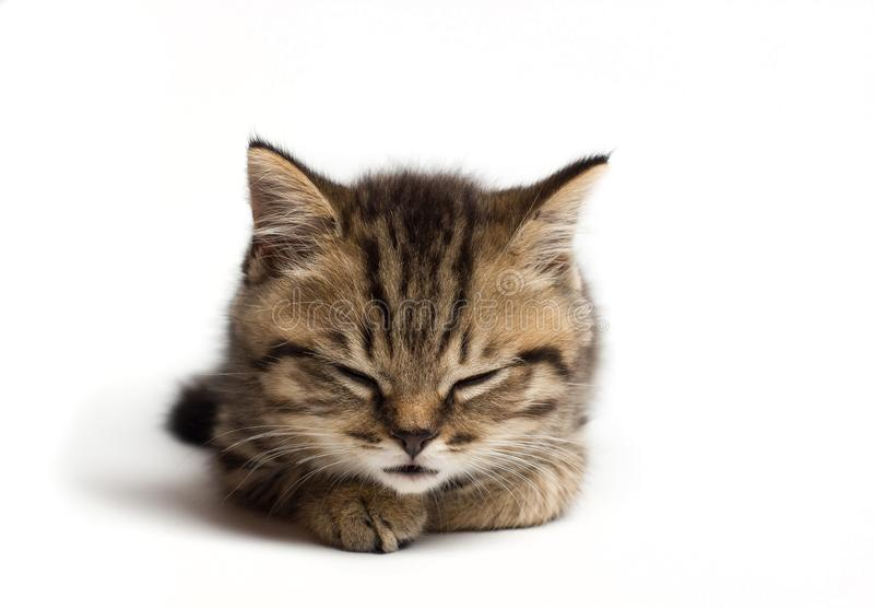 幼小猫结束了眼睛和睡眠 ?? 库存图片