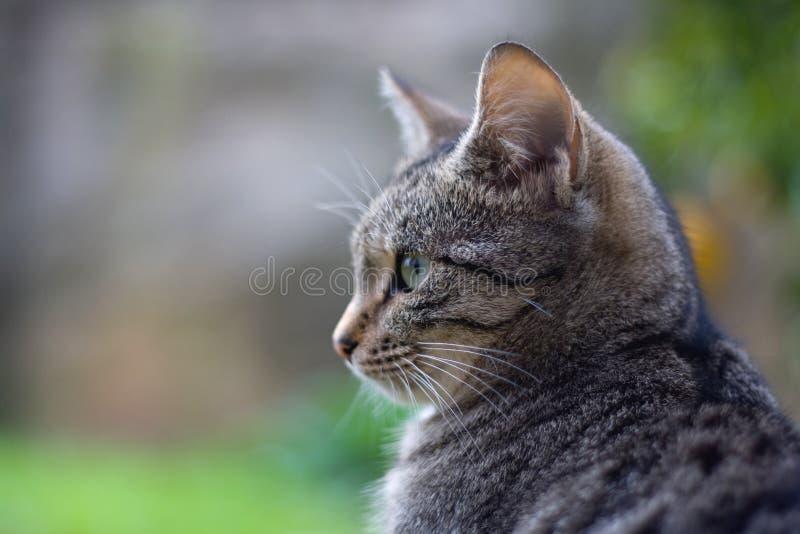 幼小猫 库存图片