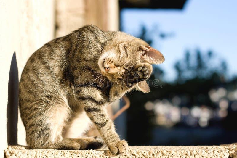 幼小猫 库存照片