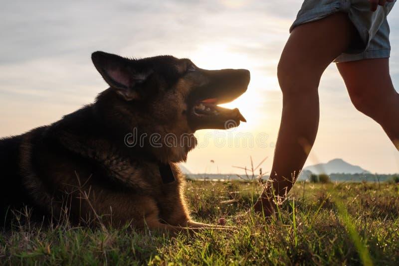 幼小说谎在绿草的狗德国牧羊犬休息在比赛以后 免版税库存图片