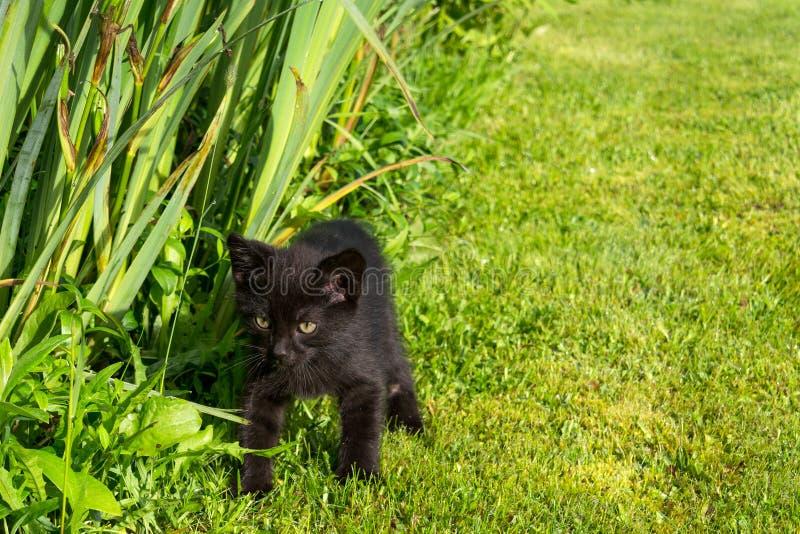 幼小逗人喜爱的小猫 库存图片