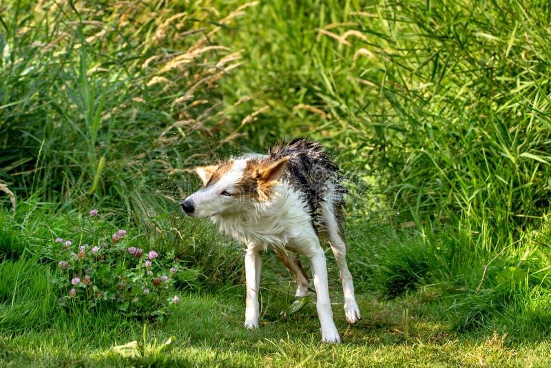 幼小逗人喜爱的狗震动,在河沿的绿色芦苇 库存图片