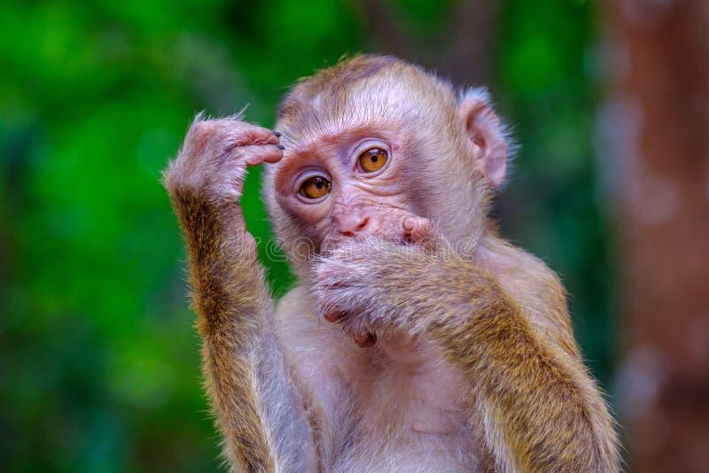 幼小逗人喜爱的猴子在泰国的绿色森林里 在思想家的姿势 库存照片