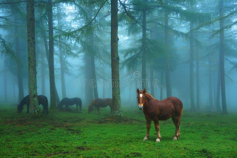 幼小马在有雾的森林里 免版税图库摄影