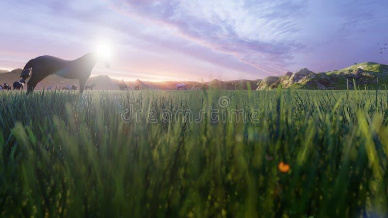 幼小马牧群在一个美丽如画的绿色草甸吃草在一个美好的夏天早晨 3d?? 皇族释放例证