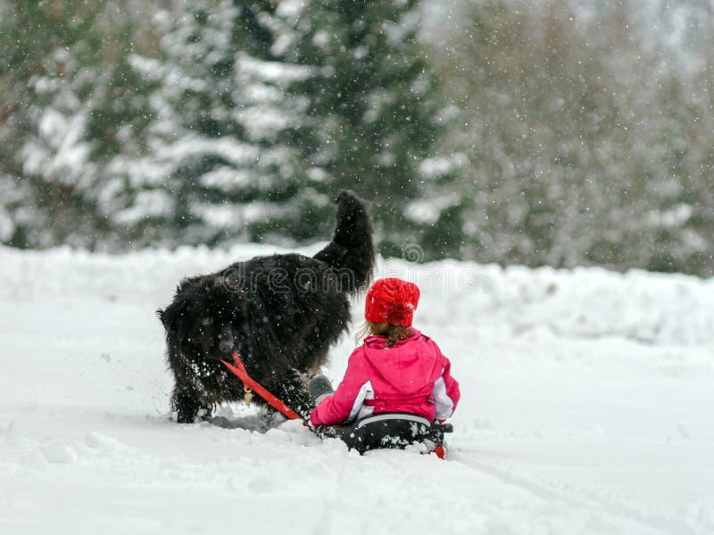 幼小newfoundlander狗运载有孩子的雪撬雪的 库存照片