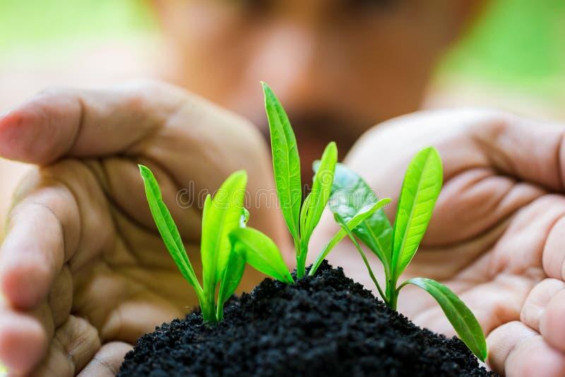 幼木和丰盈土壤在有模糊的面孔人的手,成长概念上 库存图片