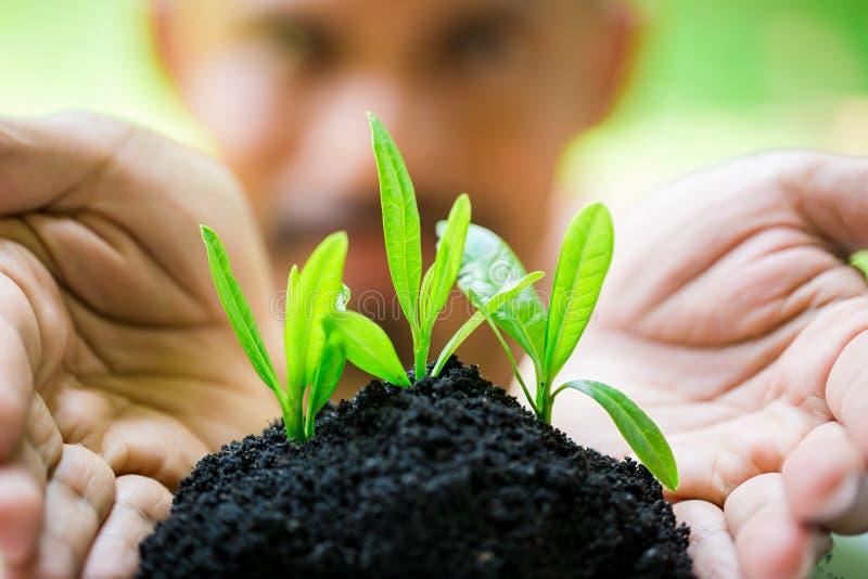 幼木和丰盈土壤在有模糊的面孔人的手,成长概念上 库存照片