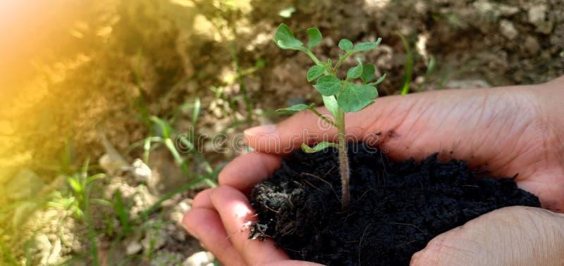 幼木和土壤 库存照片