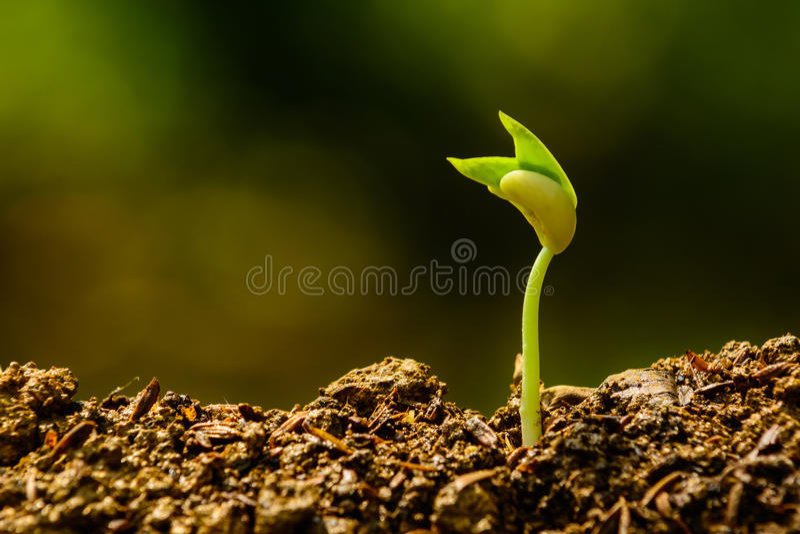 幼木和生长 免版税库存照片