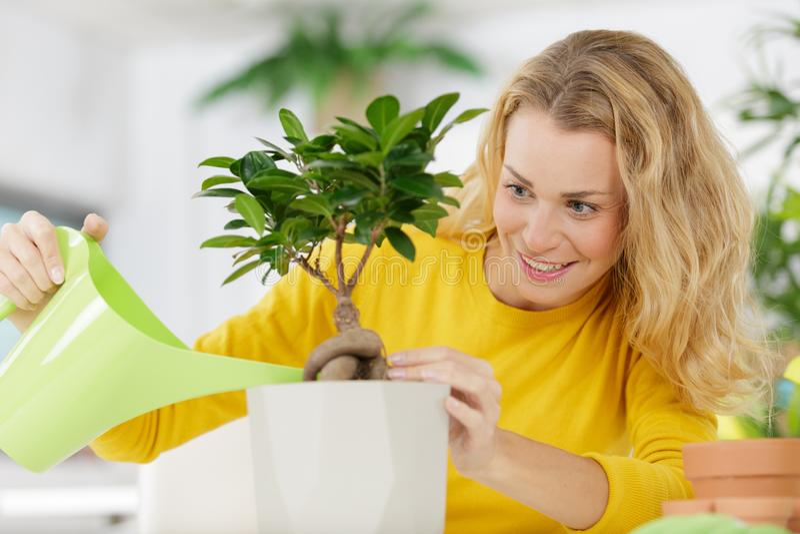 幼木在塑料罐的勿忘草花有喷雾器的 免版税图库摄影