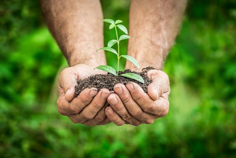 年幼植物在反对绿色春天背景的手上 库存照片