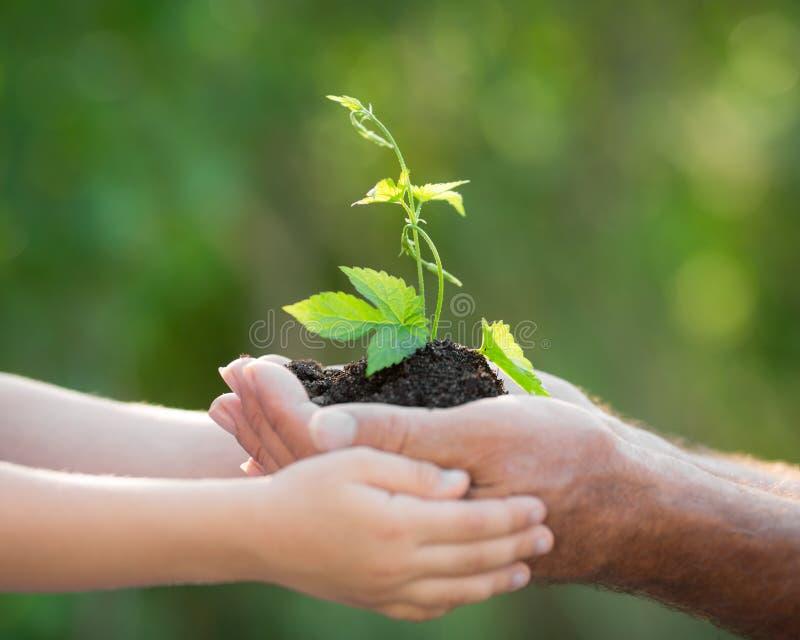 年幼植物在反对绿色背景的手上 库存照片