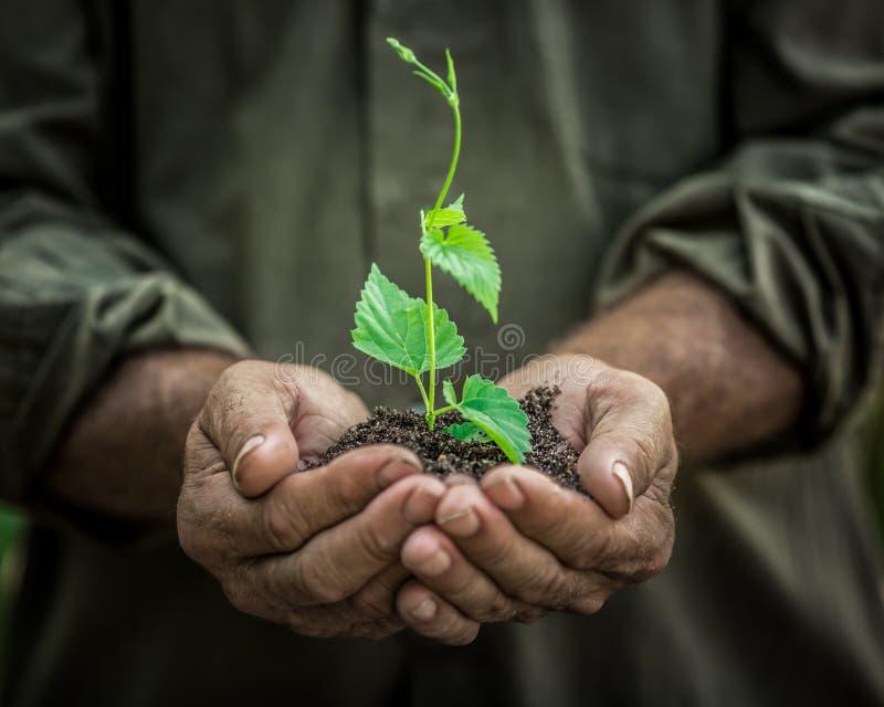 年幼植物在反对绿色背景的老手上 免版税库存照片