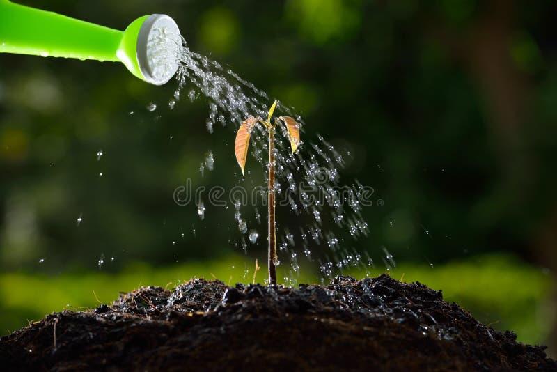 年幼植物 免版税图库摄影