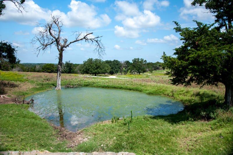 幽谷的罗斯, TX池塘 免版税图库摄影