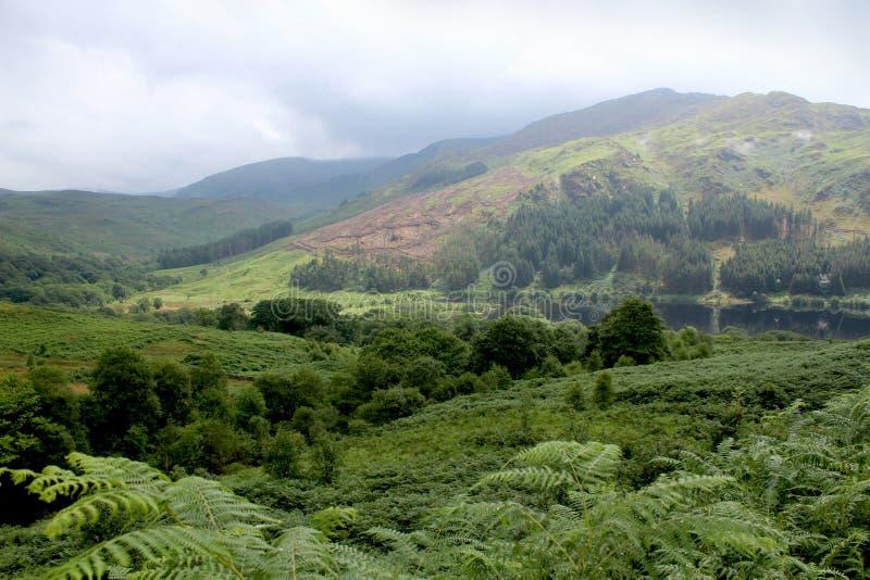 幽谷Trool,盖洛韦森林公园,苏格兰 库存照片
