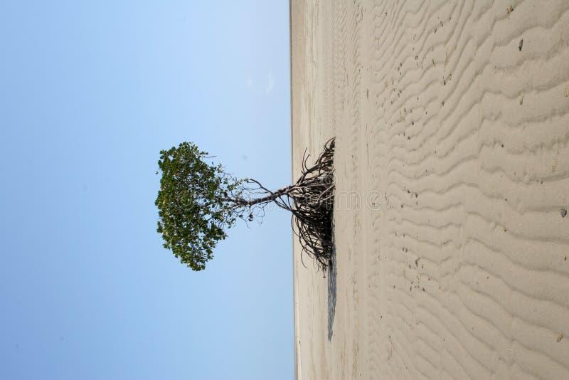 幽静结构树 免版税库存照片
