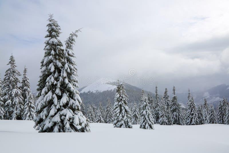 庄严冬天风景 在用雪盖的草坪好的树在冷淡的天站立倾吐与雪花 免版税库存图片