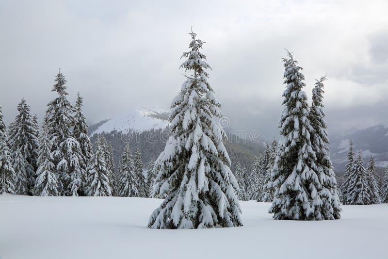 庄严冬天风景 在用雪盖的草坪好的树在冷淡的天站立倾吐与雪花 免版税图库摄影
