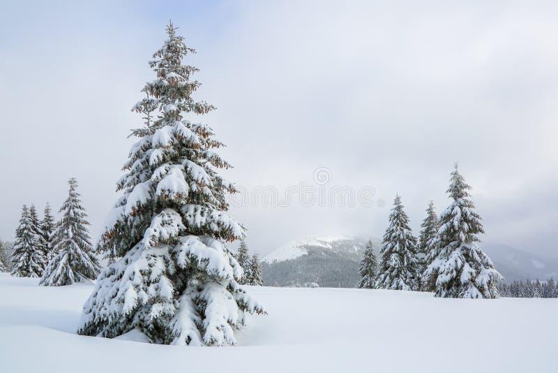 庄严冬天风景 在用雪盖的草坪好的树在冷淡的天站立倾吐与雪花 库存图片