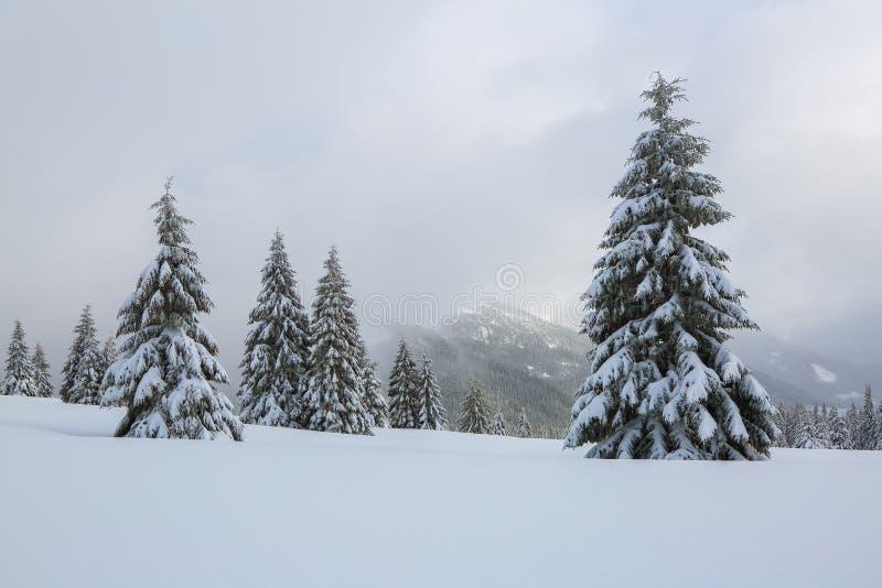 庄严冬天风景 在用雪盖的草坪好的树在冷淡的天站立倾吐与雪花 库存照片