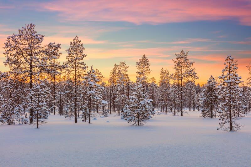 庄严冬天风景-日落、森林、树和雪 库存图片