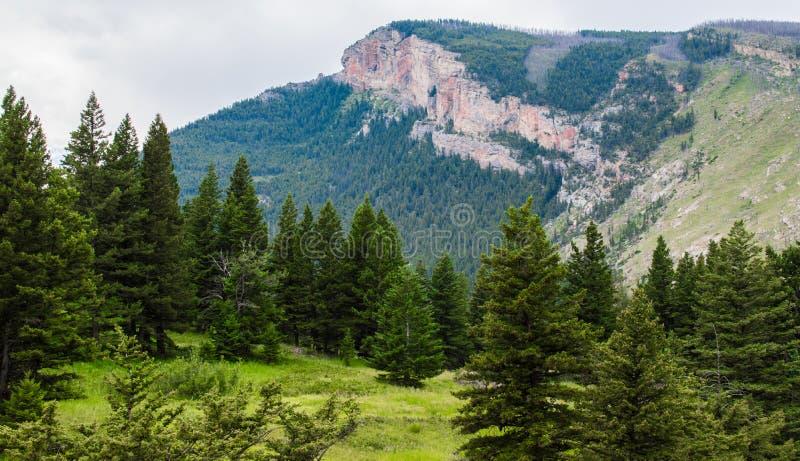 庄严用豪华的森林盖的山峰和倾斜的山坡在Bozeman,蒙大拿附近 免版税图库摄影