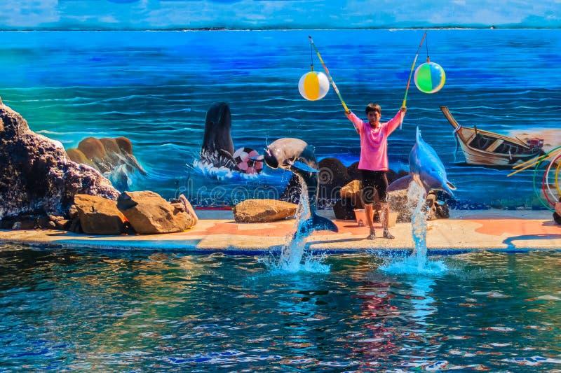 庄他武里,泰国- 2015年5月5日:教练员教海豚 库存图片