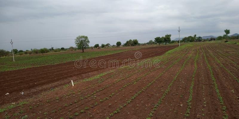 庄稼领域在印度 库存照片